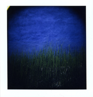 Polaroid_07_holga_bluewall.jpg.jpg
