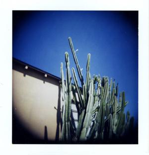 Polaroid_10_holga_cactus.jpg.jpg
