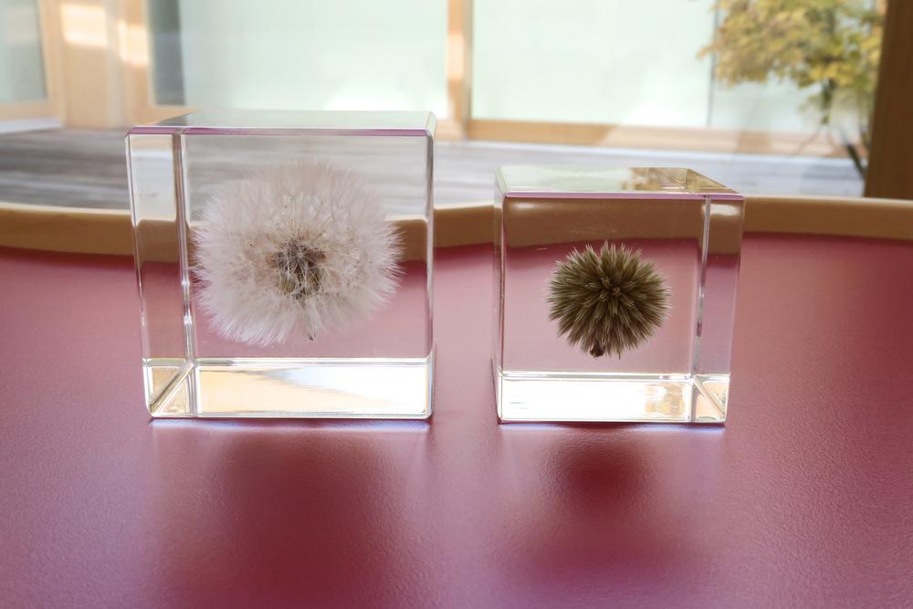 Usagi Nedoko Sola Cube 10.jpg