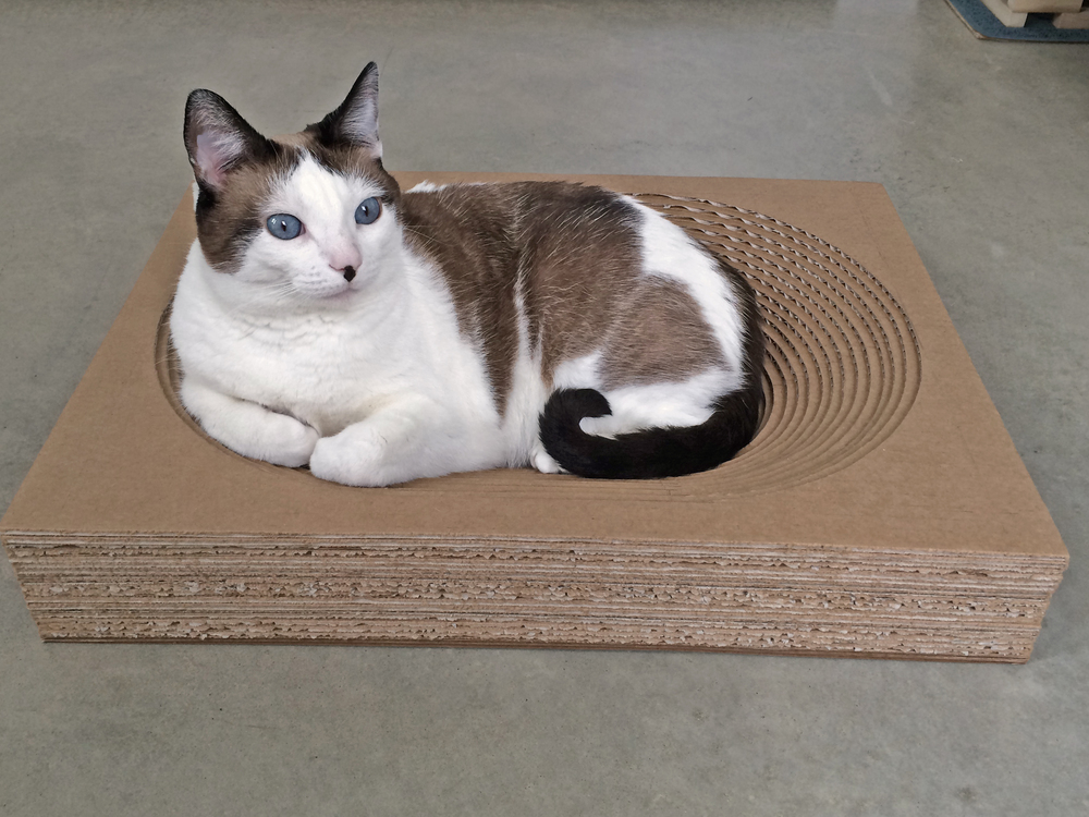Modern Cardboard Cat Bed - Stadium Version