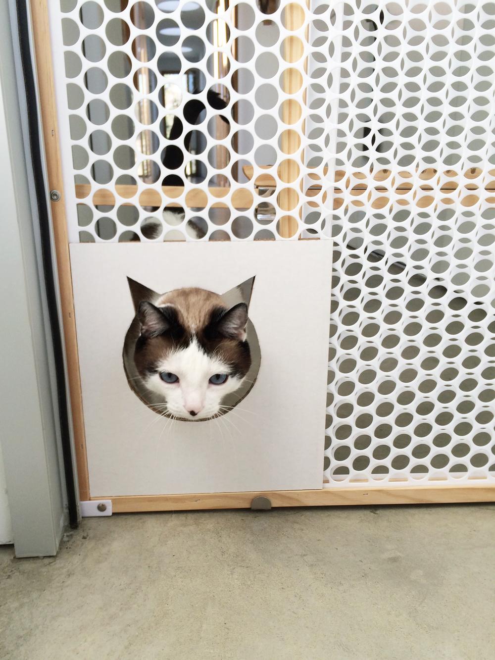 Cat Gate