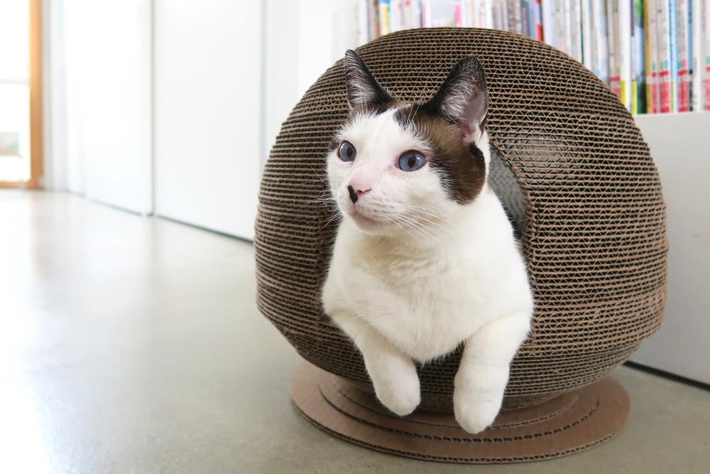 Cardboard Cat Scratcher Dome House