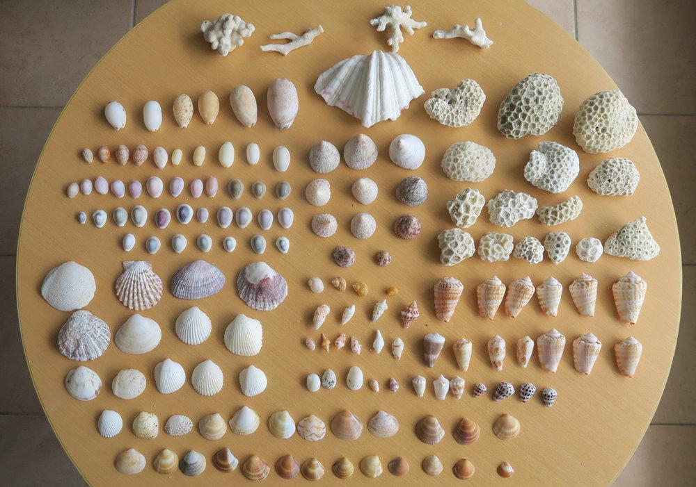 Kumejima-Shells-02.jpg
