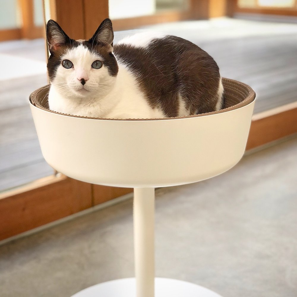 IKEA Cat Bed Hack