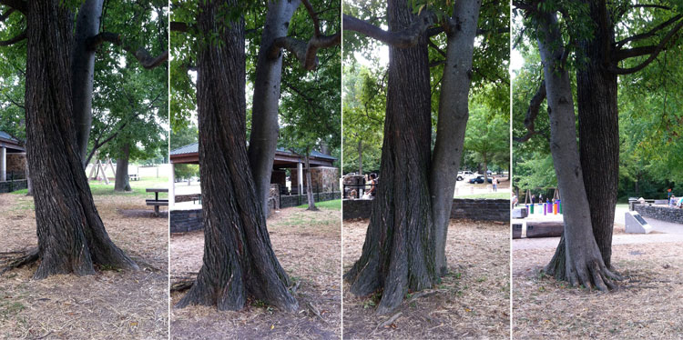 A pair of waltzing trees