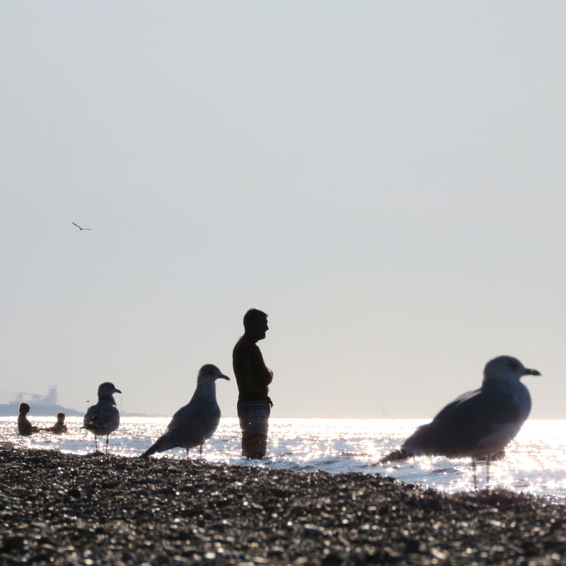 Beachbirds2_PaulaKovarik