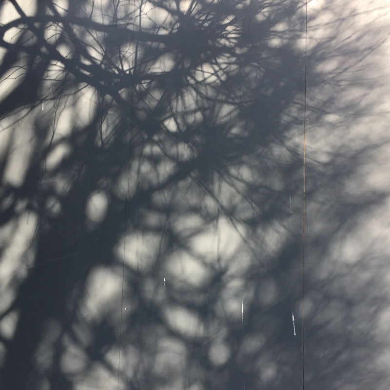 Europe_shadows_trees.jpg