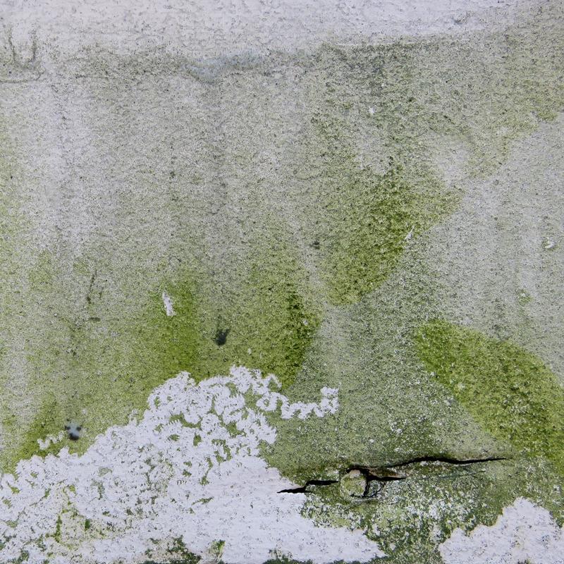 Inspirations_PaulaKovarik_algae.jpg