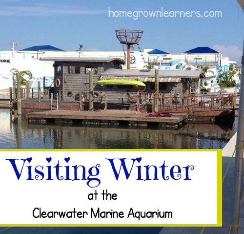 Visiting Winter at the Clearwater Marine Aquarium