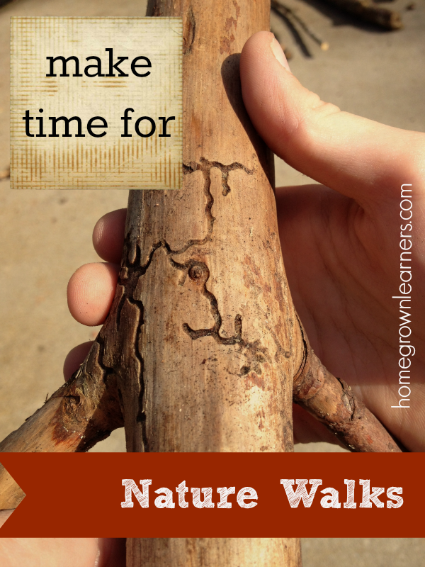 Nature study in your homeschool tips and tricks for Home building tips and tricks