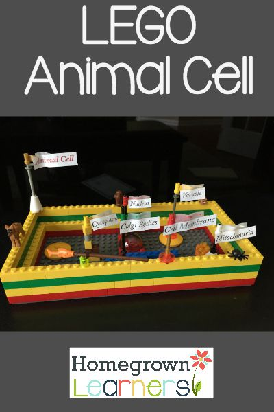 LEGO Animal Cell