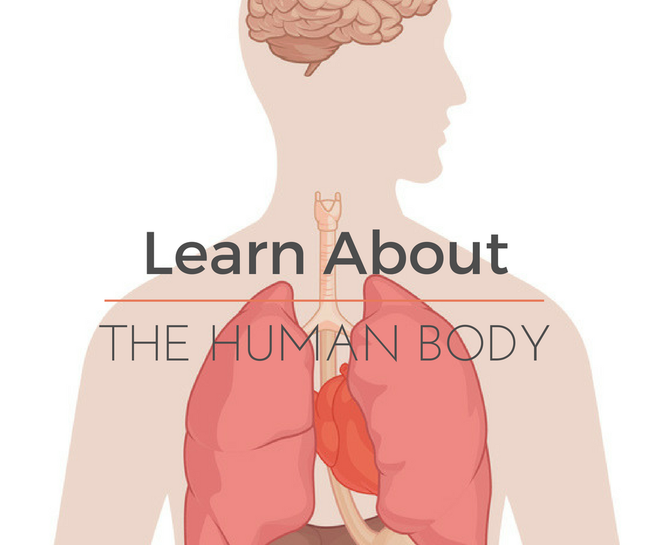 Learn About the Human Body