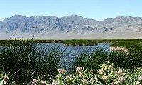Visit Fish Springs National Wildlife Refuge. Click on Fish Springs for more information.
