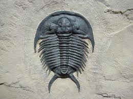 """Are you a """"rock hound""""? Why not hunt for trilobites? Click on the trilobite above for information."""