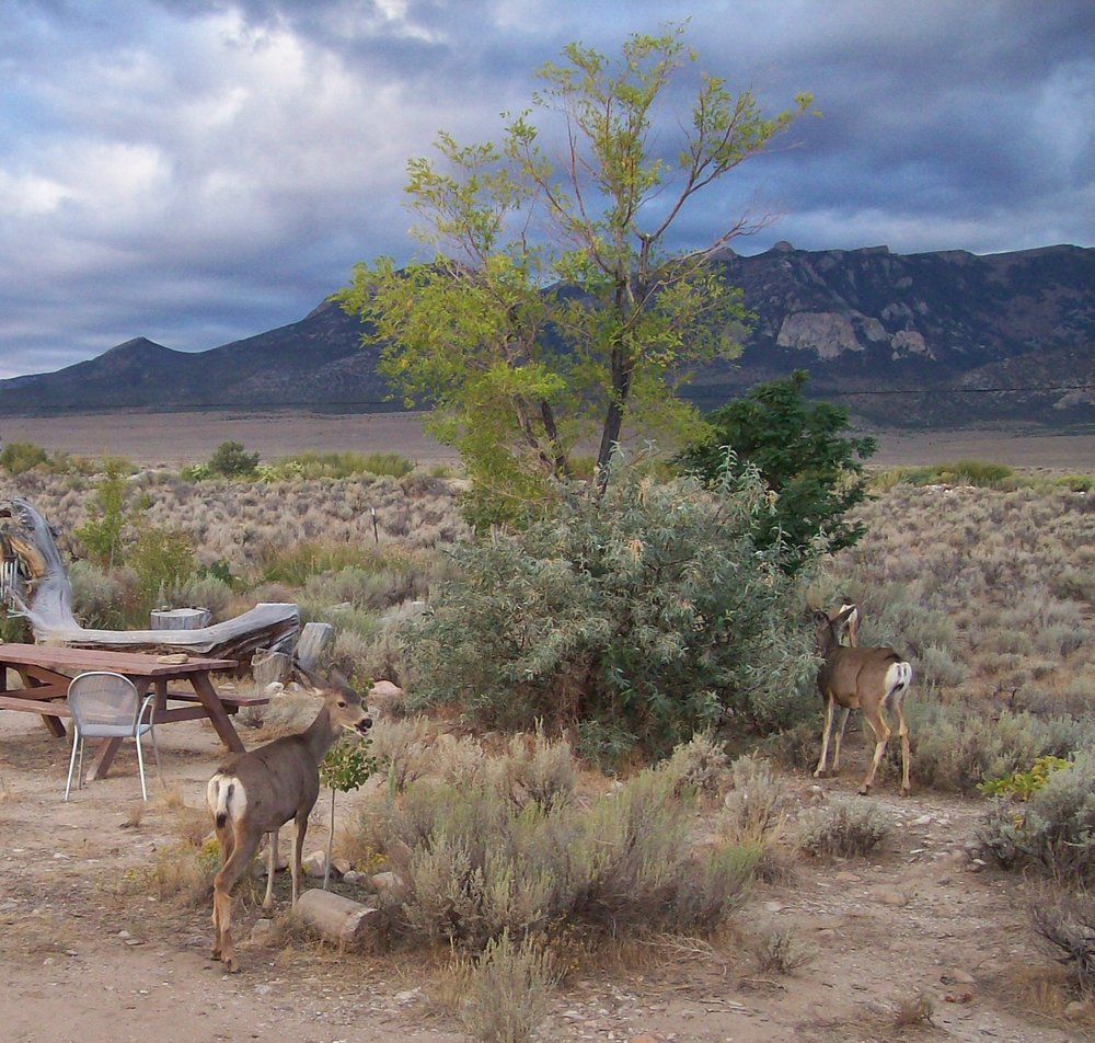 enjoy close encounters with great basin wildlife
