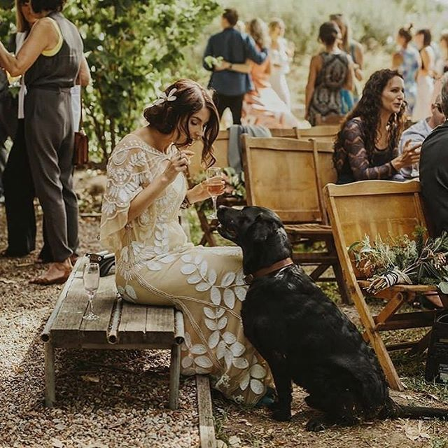 Just a bride and her dog 💛  Photo// @danellebohane