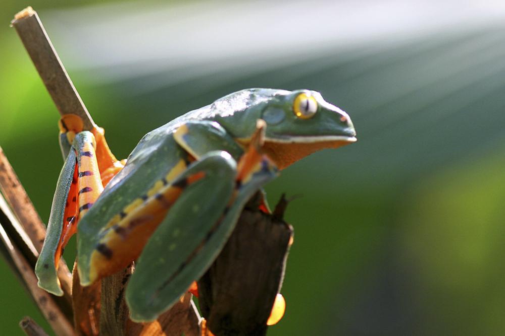 ed 262 sunray frog IMG_0360 4x6 copy.jpg
