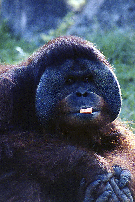 ed 146 4x6 carrot ape_.jpg