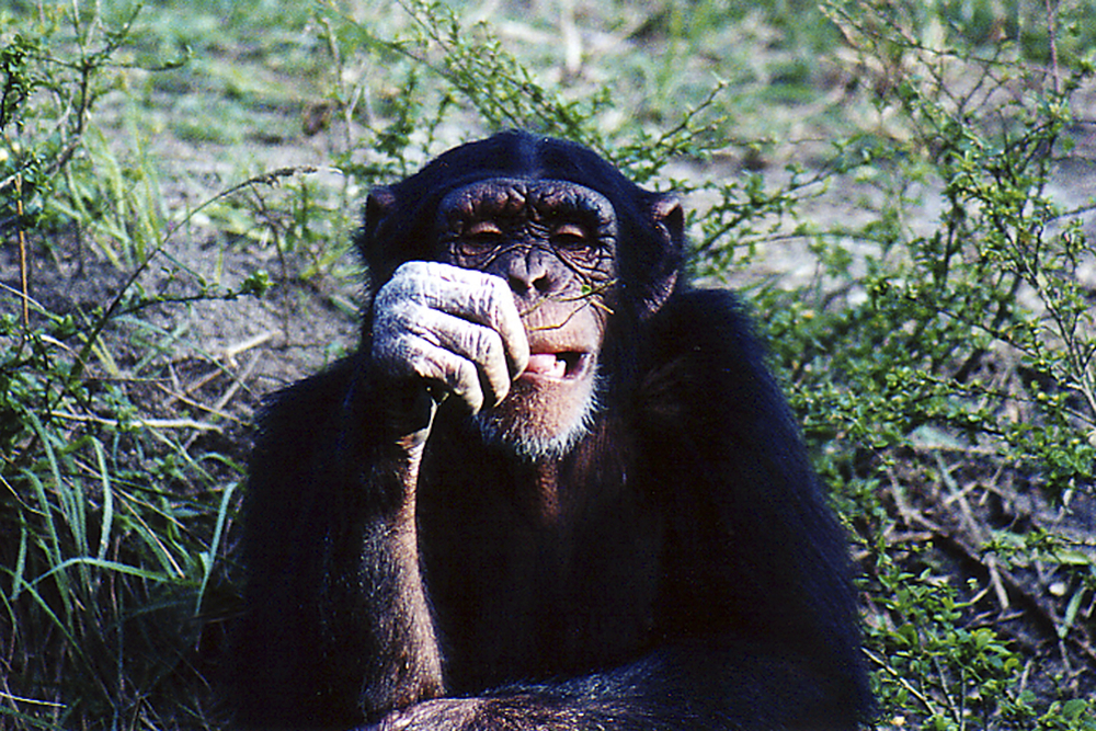 ed 145 4x6 chimp 1.jpg