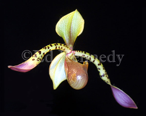 ed-018--res-300-137_3715.jpg-orchid-8x10_.jpg