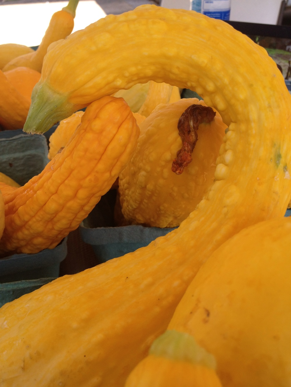 Crooked Neck Squash