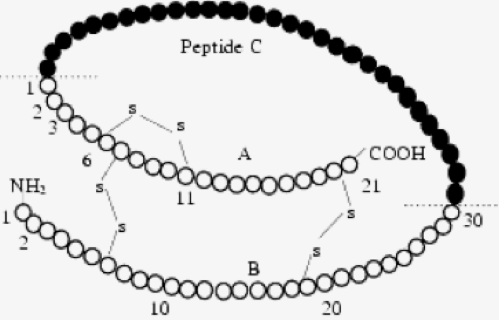 Peptide_C.png