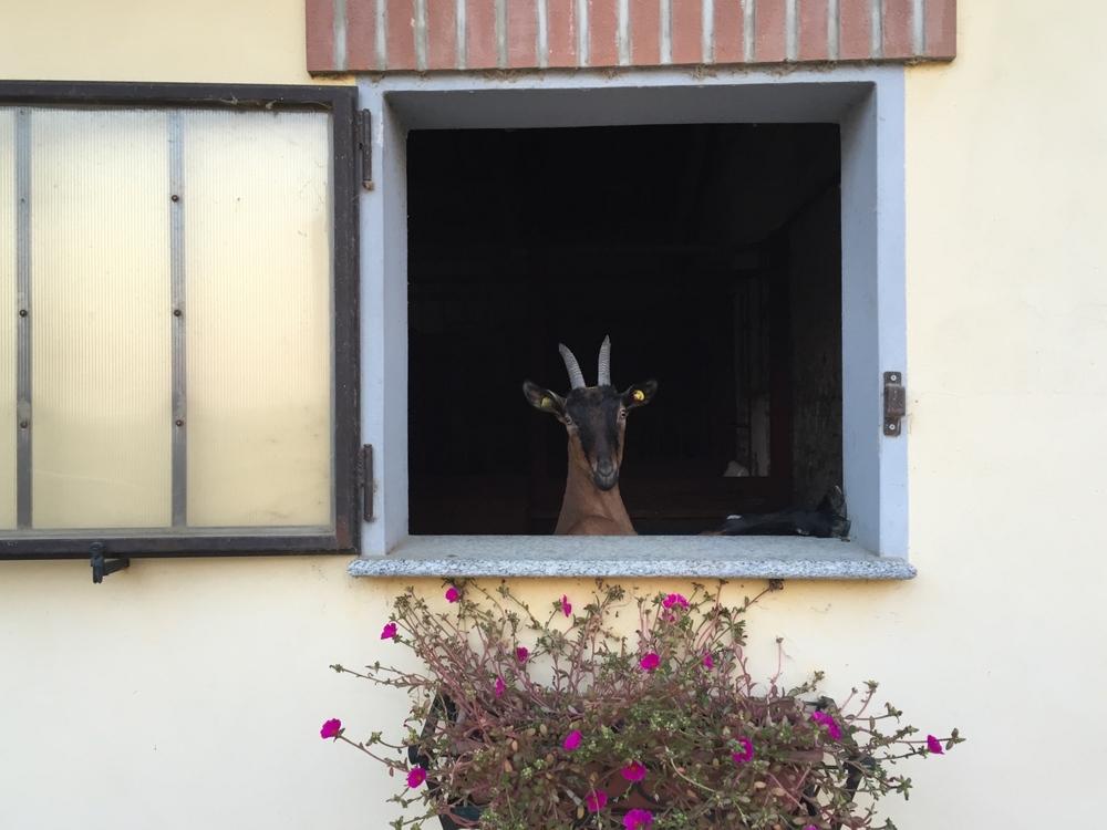 """""""Apri le finestre della calma e vedrai d'improvviso erompere il radioso sole della gioia"""" foto di DJ Tommy Cassano (tcassano[at]aminstruments.com)."""