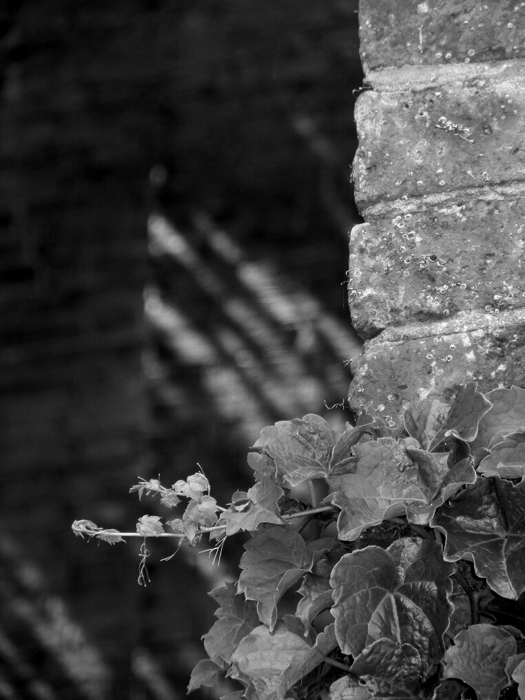 plant, brick, shadow, focal point, Beacon Hill, Charles street meeting house