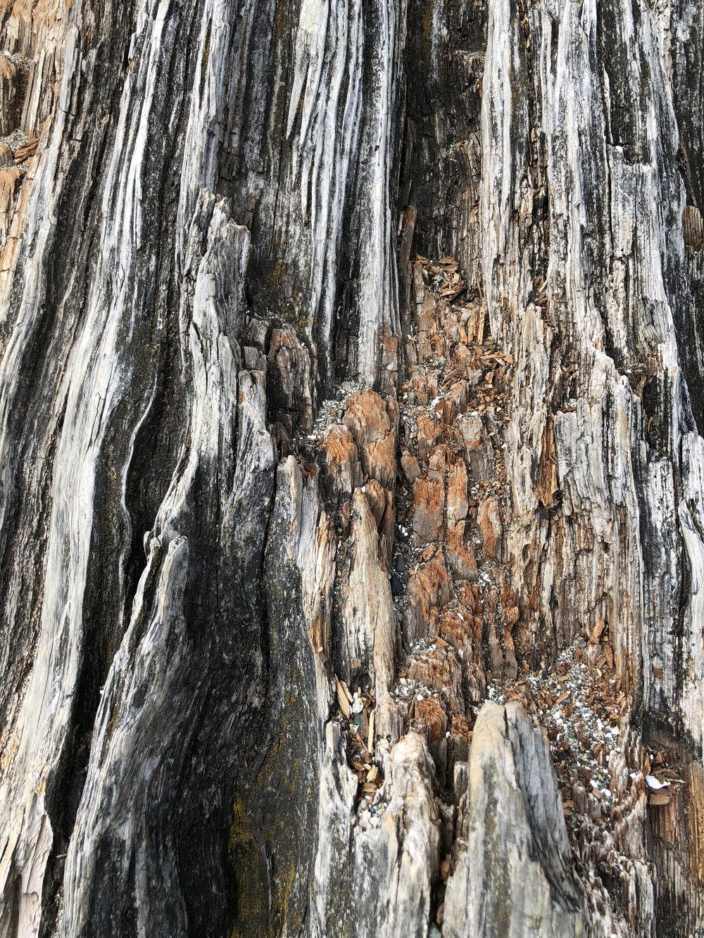 Driftwood 01