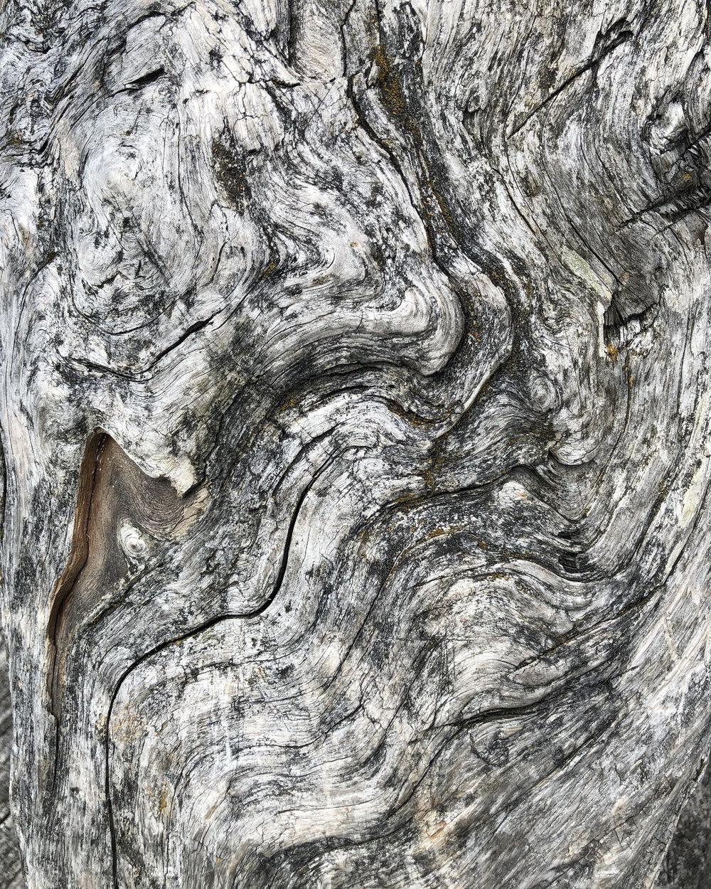 Driftwood 03