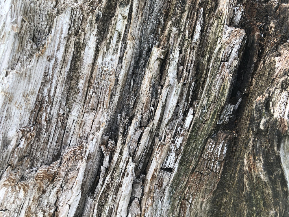 Driftwood 05