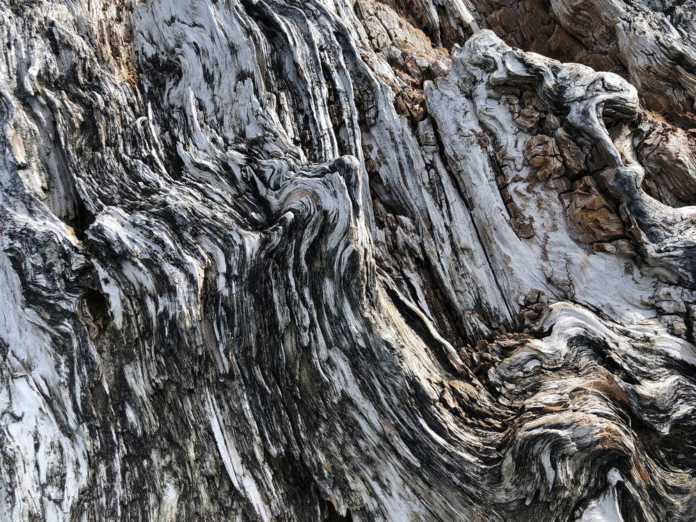 Driftwood 07