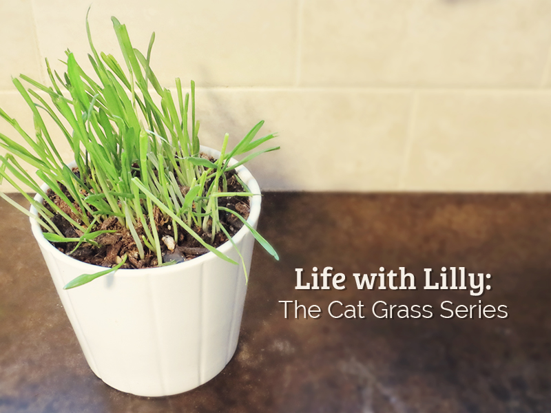 life-with-lilly-cat-grass.jpg