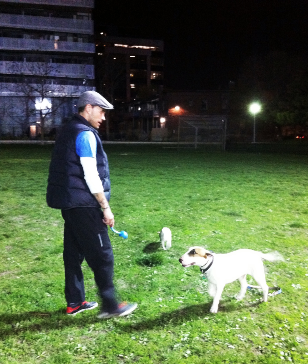 we started out with late night park visits, where Tug could get a feel for being off leash in the open space.