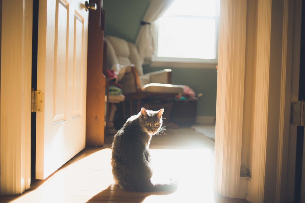 311_tallulah in the morning light.jpg