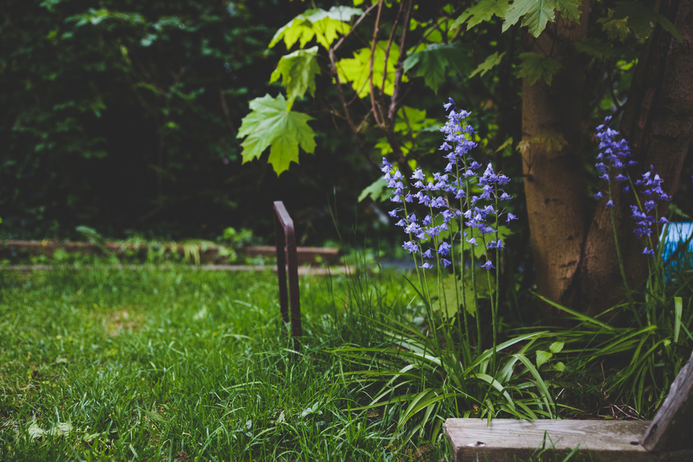 Bluebells | Francesca Russell Photography & Films | Garden City Family Photographer