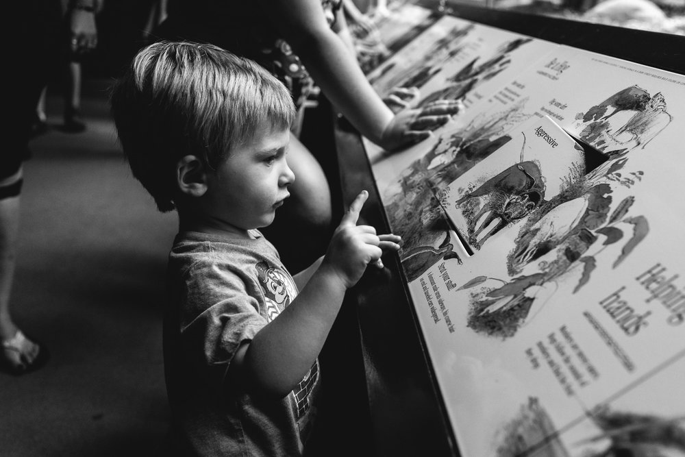 Francesca Russell Photography | Long Island & New York City Family Photographer | Boy looking at an exhibit at the zoo
