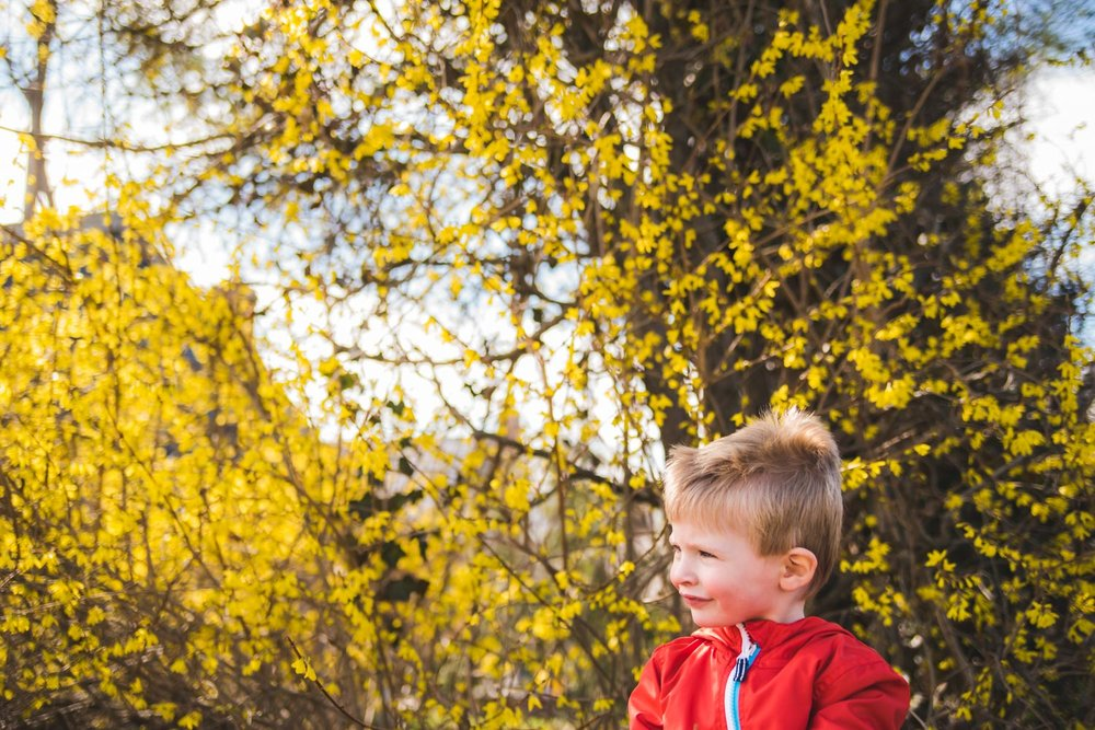 Little boy standing in front of yellow autumn leaves.