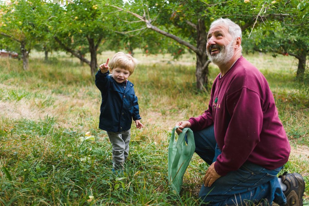 Little boy and grandfather picking apples at Philips Orchard in New York.