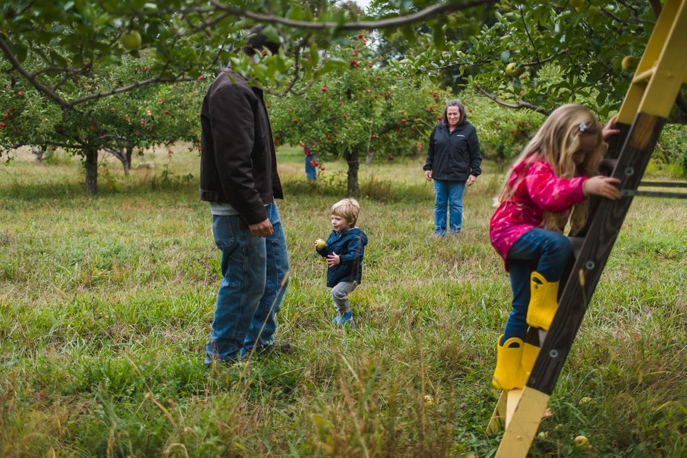 Apple picking at Philips Orchard in New York.