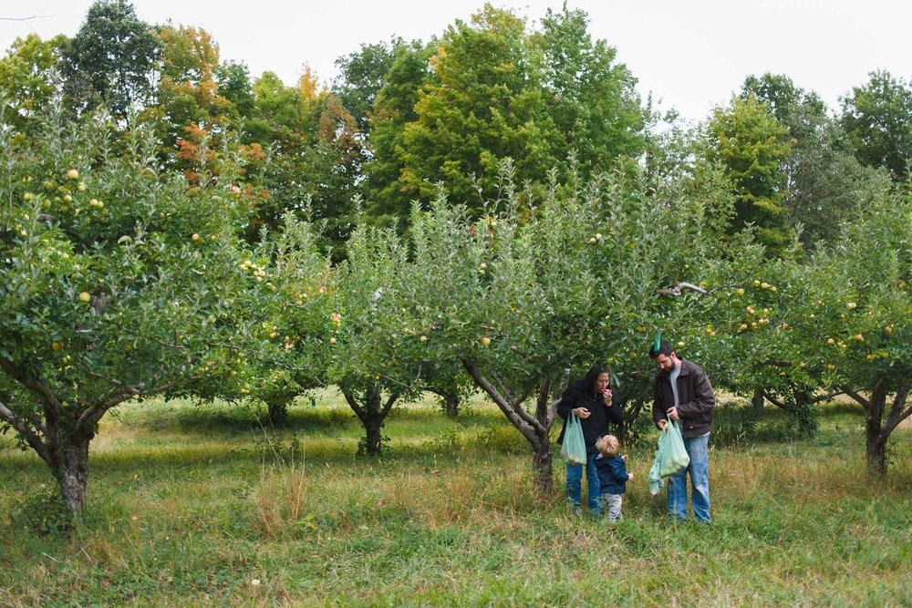 Family picking apples at Philip Apple Orchard in New York