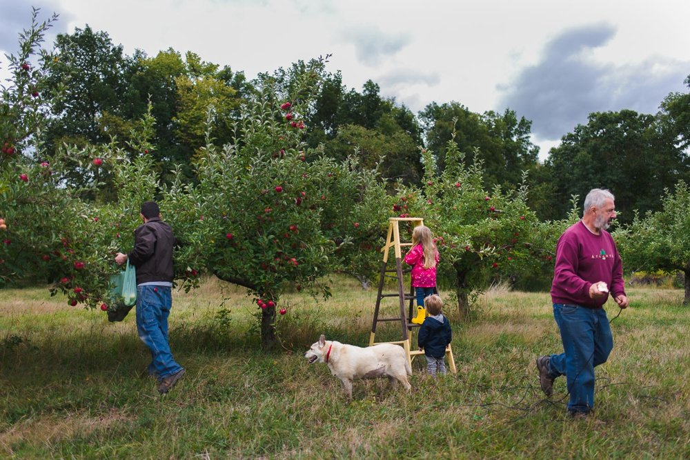 Family apple picking at Philip Apple Orchard in New York.