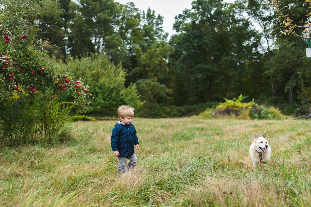 Little boy and dog at Philip Apple Orchard in New York.