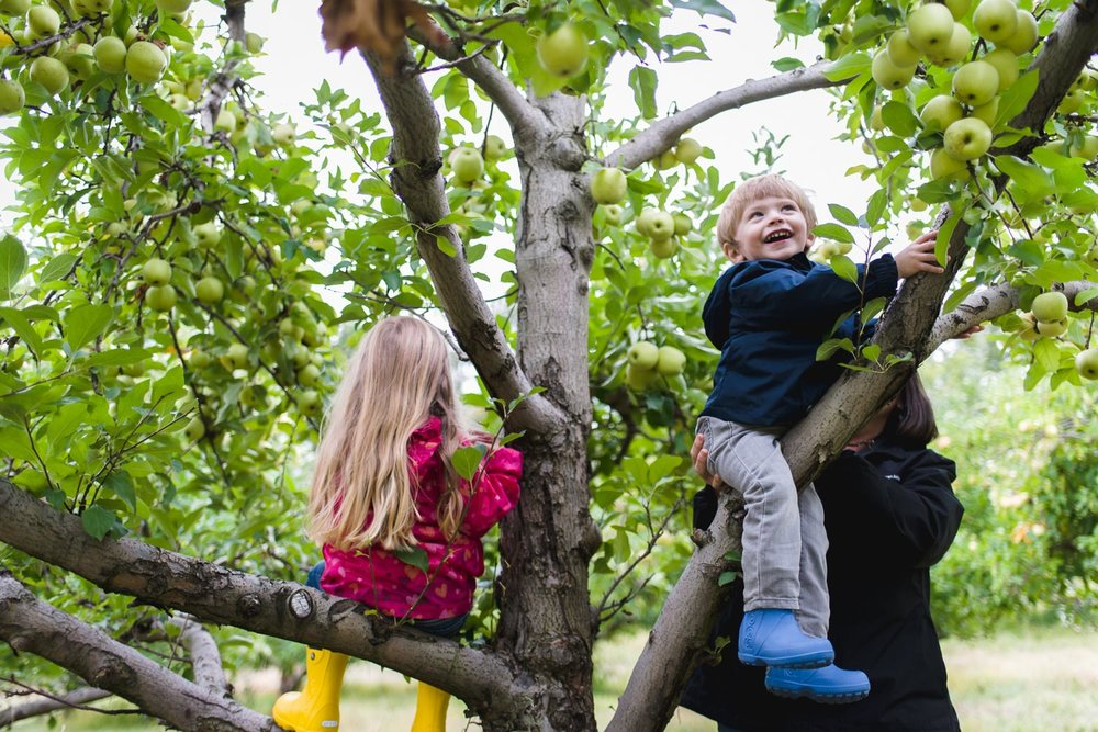 Kids climbing trees at Philip Apple Orchard in New York.