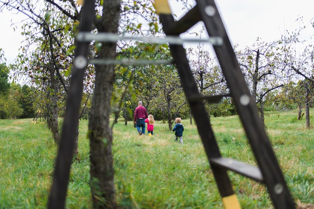 Family apple picking at Philip Orchards in New York.