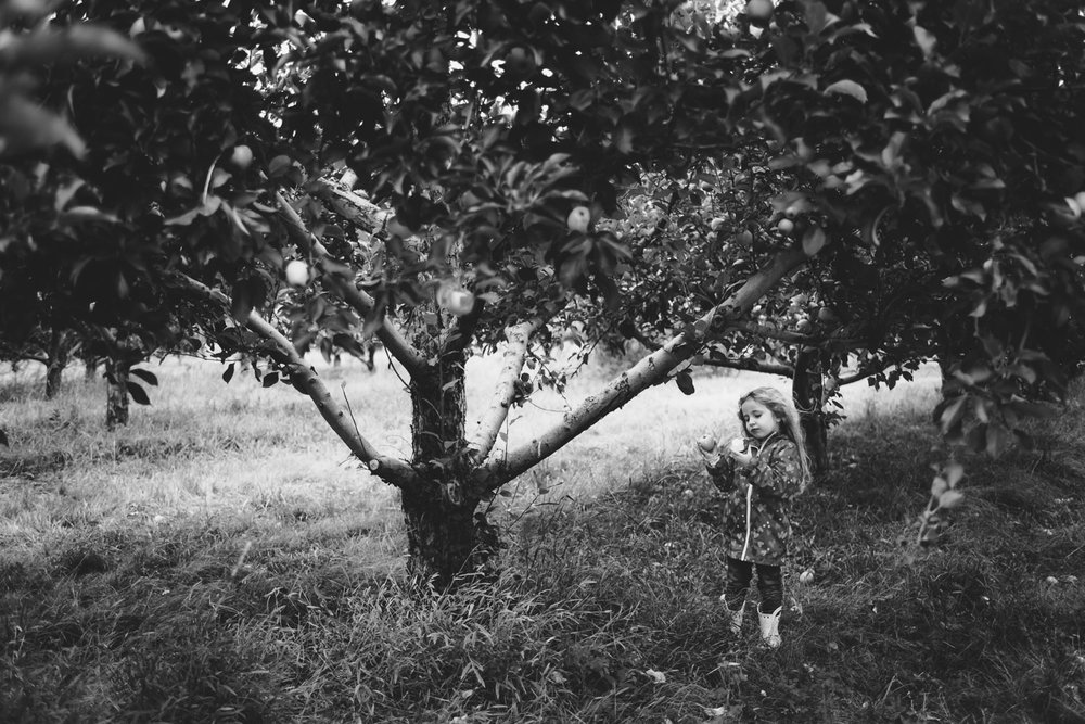 Little girl eating an apple under a tree at Philip Orchards in New York.