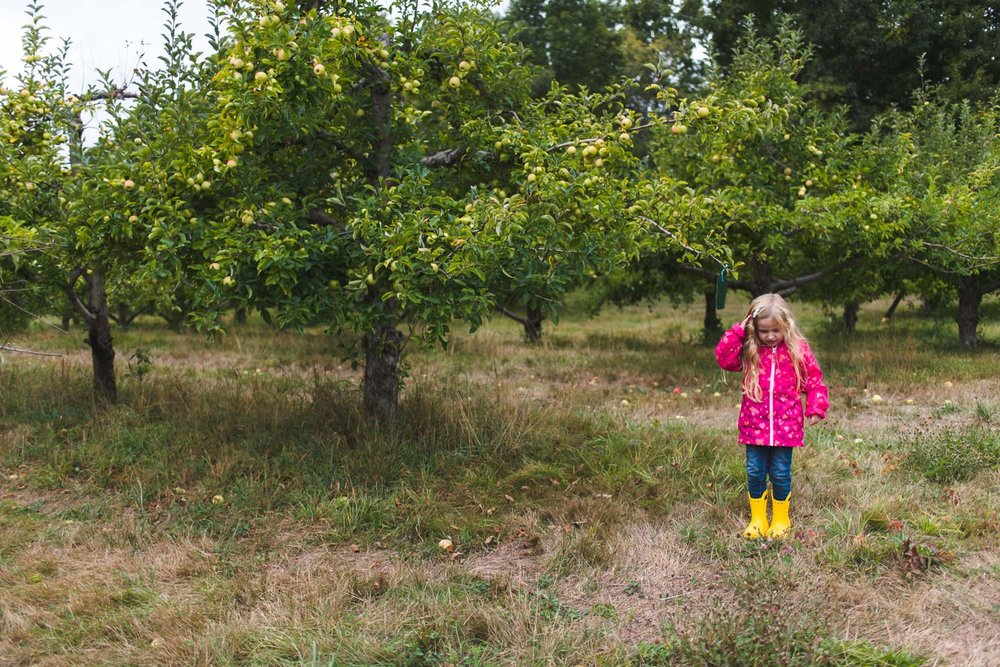 Little girl in apple orchard.