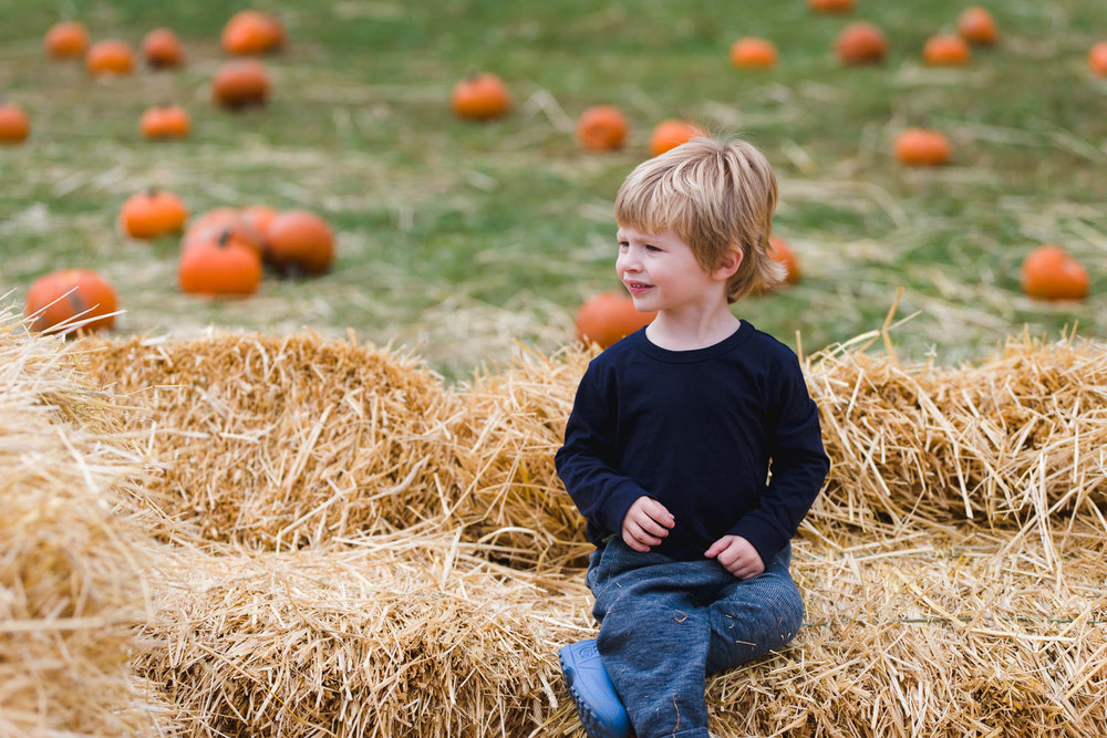 Little boy at the pumpkin patch.