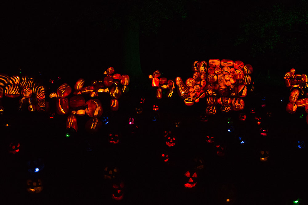 Pumpkins at the Rise of the Jack o'Lanterns at Old Westbury Gardens.