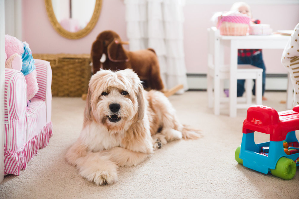 Big fluffy dog lying down in pink bedroom.
